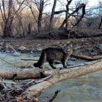 Экологическая тропа в горной Адыгее <br />«По следам дикого кота»